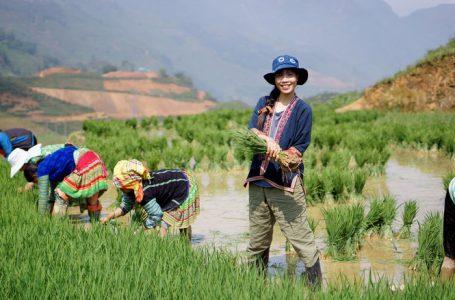 Tâm An tham gia cấy lúa cùng người bản địa