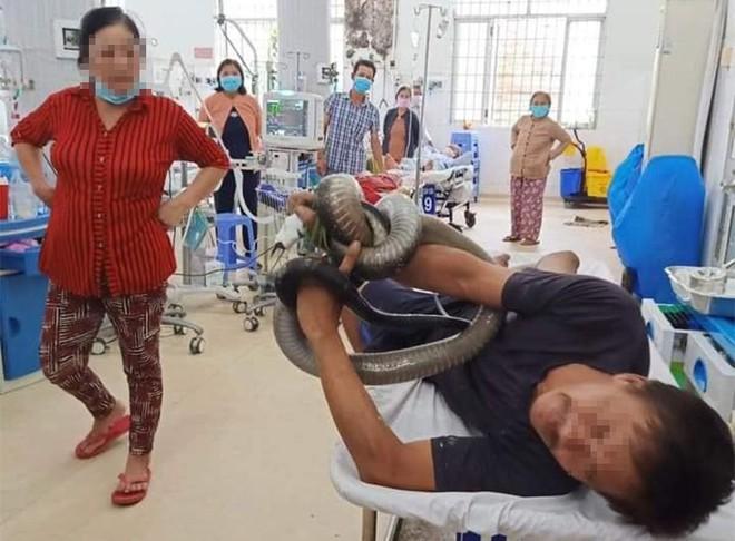 Bị rắn hổ mang chúa dài 3m cắn, nạn nhân mang luôn rắn vào phòng cấp cứu