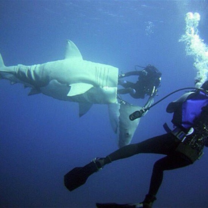 20. Troll kiểu cá mập