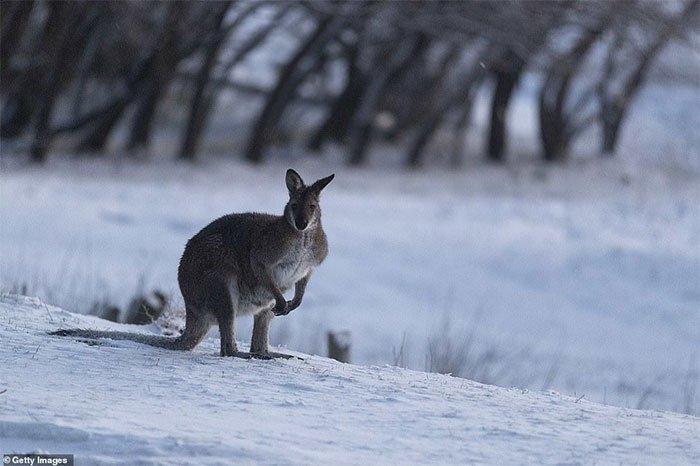 Chuyện hi hữu: Tuyết rơi tháng 8 lần đầu tiên trong 15 năm ở Australia