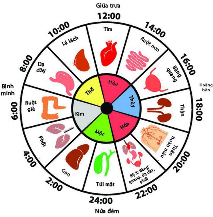 đồng hồ cơ thể