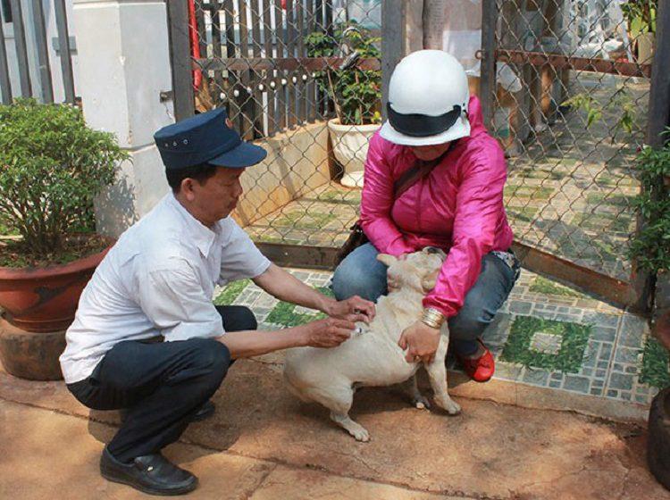 Nhiều người dân Tây Nguyên lơ là tiêm phòng cho vật nuôi