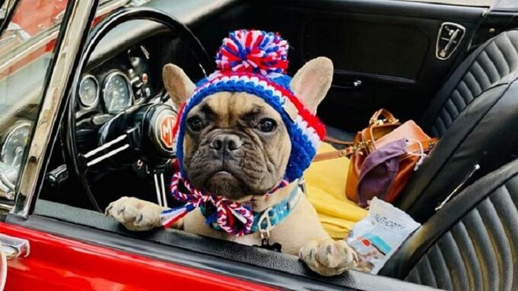 Mỹ: Người dân bầu chó lên làm thị trưởng