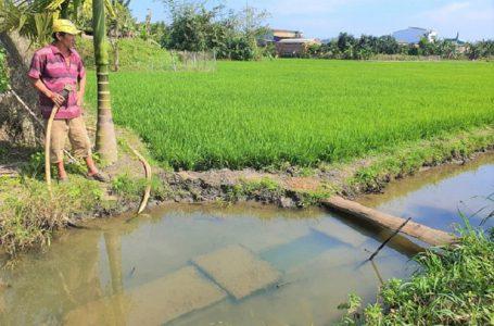 Người dân mót nước gỉ để tưới lúa