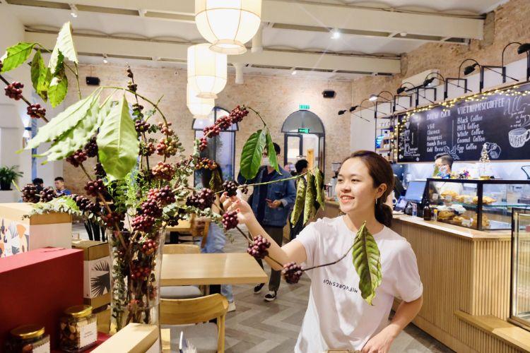 Độc đáo: Dân thành phố mua cành cà phê về chưng tết