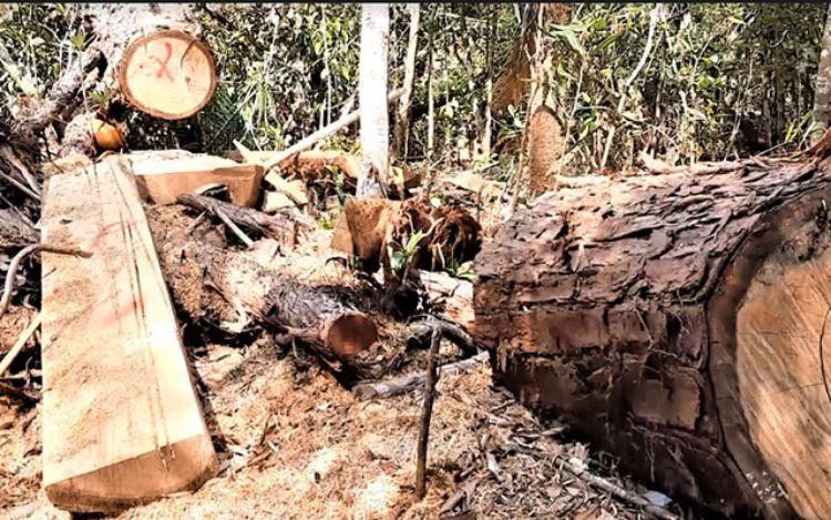 phá rừng