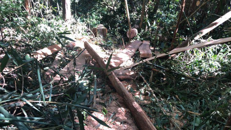 rừng bị đốn hạ tại gia lai