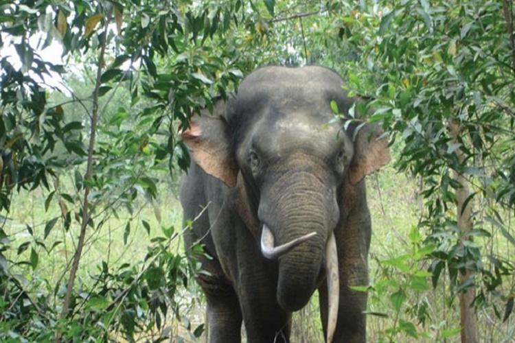 Xác minh thông tin người dân bị chấn thương sọ não do voi rừng quật