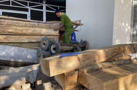Vụ tàn phá hàng chục cây gỗ pơ mu quý hiếm tại huyện Krông Bông