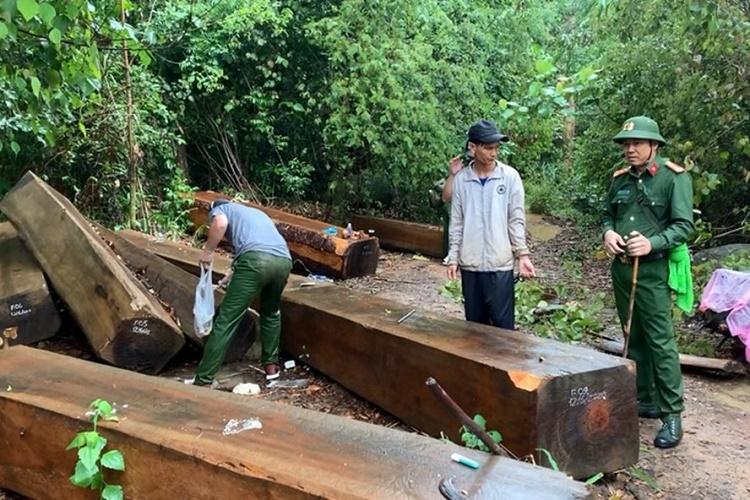 Vì sao Đắk Lắk liên tục bị mất rừng?