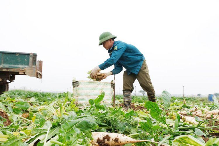 nông sản mê linh hà nội