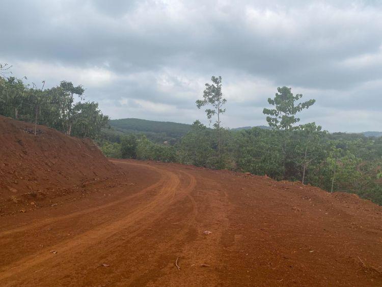 phá rừng mở đường
