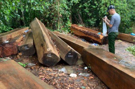 Một vụ phá rừng quy mô lớn ở huyện Krông Bông nhưng kiểm lâm không biết