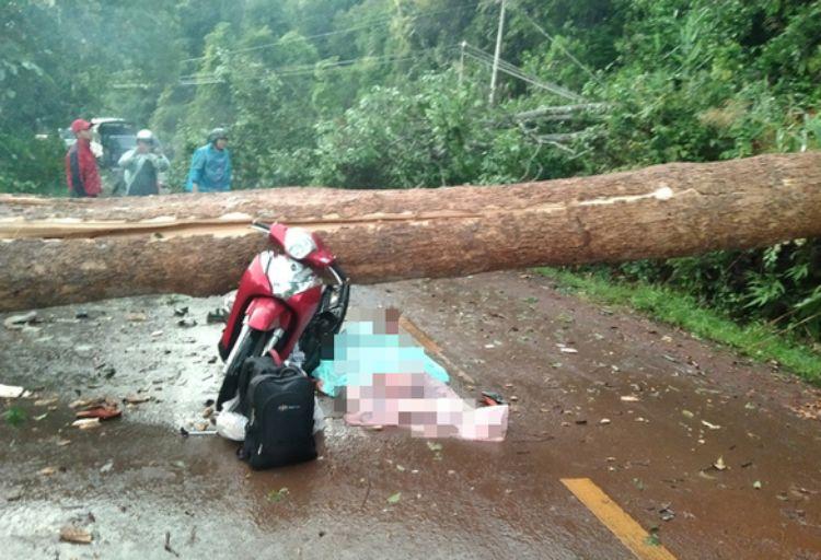 Cây đổ ngang đường Đắk Nông – Lâm Đồng đè chết người đi xe máy