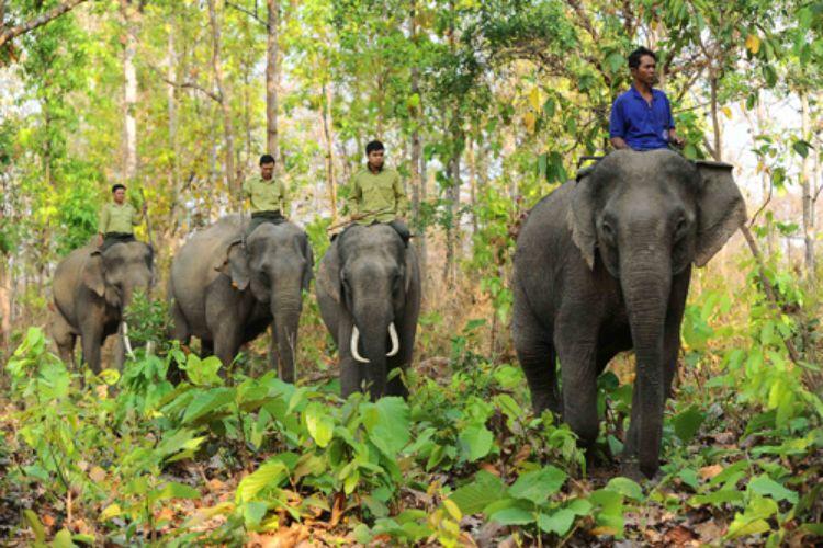 Giám đốc Trung tâm Bảo tồn voi Đắk Lắk đánh bài lấy tiền… mua bia?