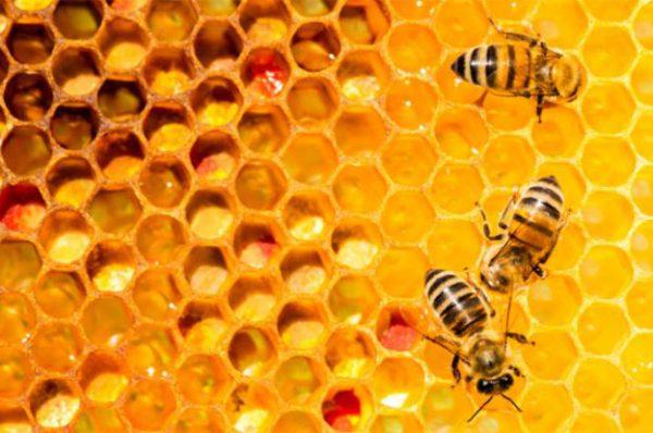 Mật ong mật