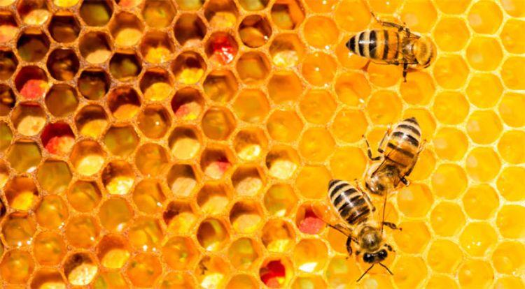 Vì sao mật ong có thời hạn sử dụng vĩnh viễn, không bao giờ hư hỏng?